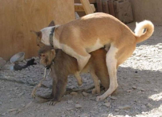 Top 19 hilarious animals caught in doggy style position media saver